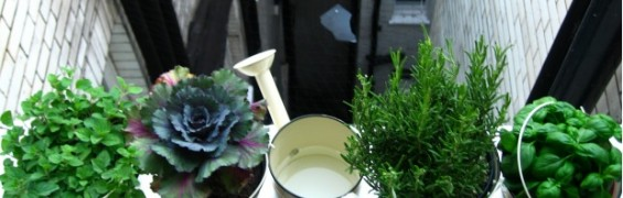 Healthy Habits are created by growing a Herb Garden on a windowsill