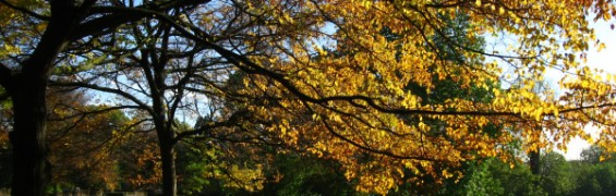Autumn surroundings beat stress when working out